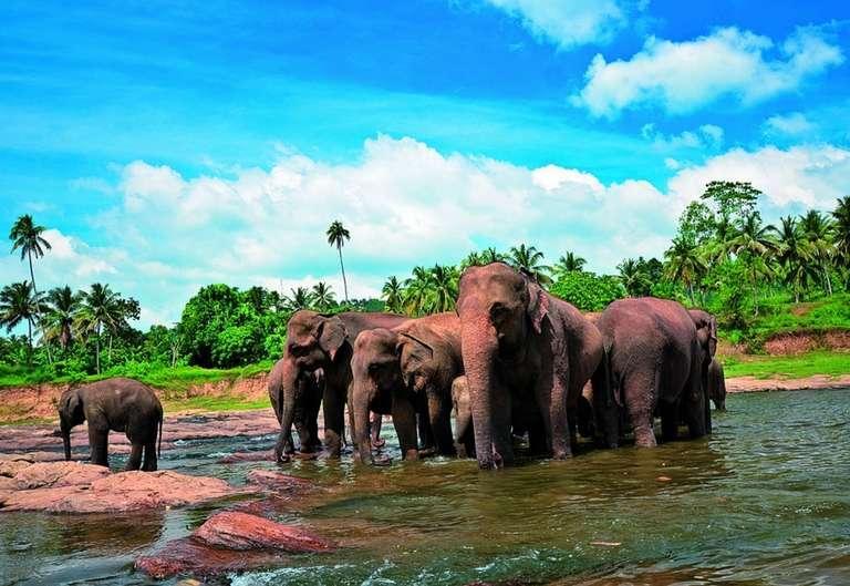 Putovanje u Šri Lanku