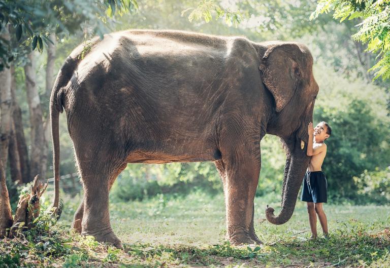 Šri Lanka - Nova Godina